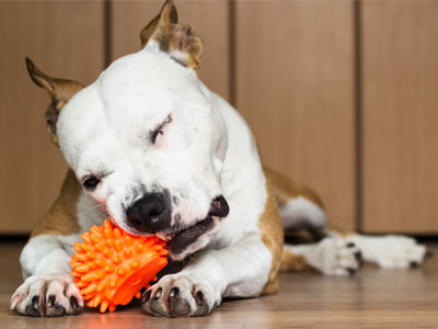 Use Chew Toys to Clean Your Dog's Teeth
