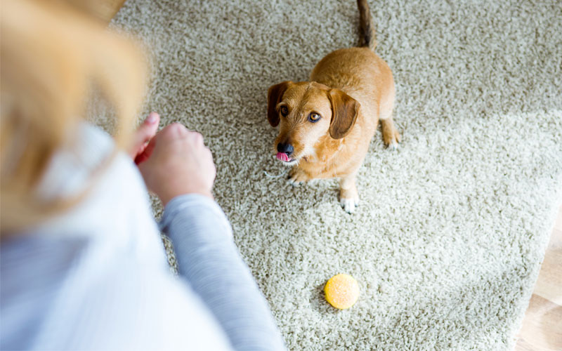 indoor-games-play-with-dog