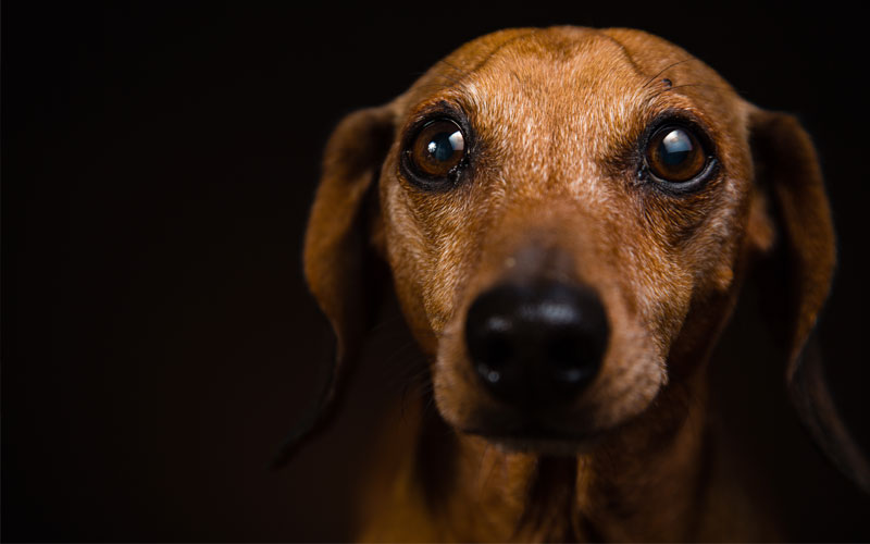 Does Your Dog Suffer of Separation Anxiety?